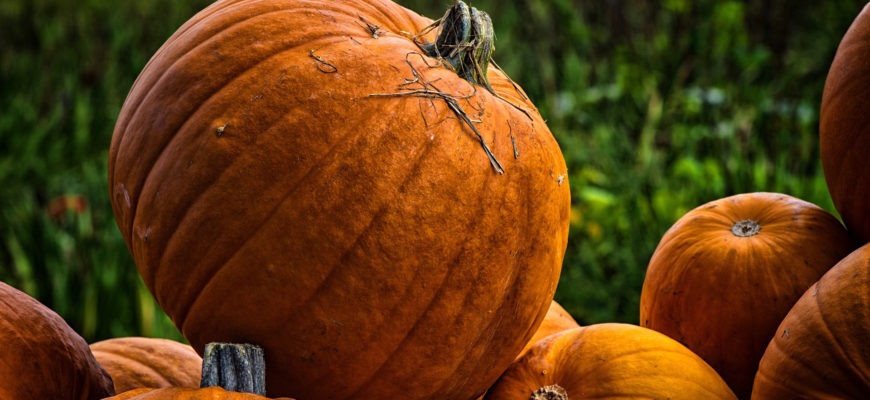 Ways to Celebrate Fall Activities at Work