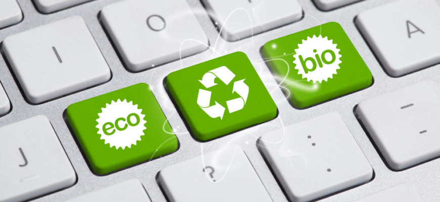 Going Green: A Guide to an Eco Friendly Office Space